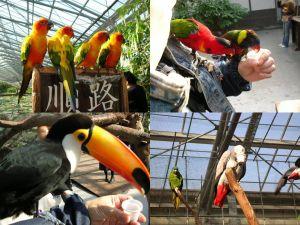 掛川花鳥園 その2