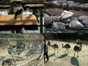 掛川花鳥園 その3