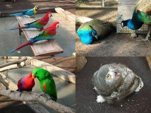 掛川花鳥園 その4
