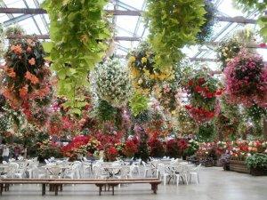 神戸花鳥園 温室