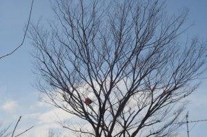 木に掛かる1