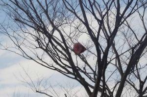 木に掛かる2